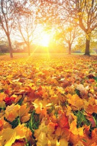 Autumn self catering breaks